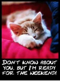 *stretches* I ish weady fo teh weekends d(=^・ω・^=)b @ http://www.funnycatpictures.net/funny-tgif-cats/: DON'T KNOW ABOUT  YOU, BUT I'M READY  FOR THE WEEKEND! *stretches* I ish weady fo teh weekends d(=^・ω・^=)b @ http://www.funnycatpictures.net/funny-tgif-cats/