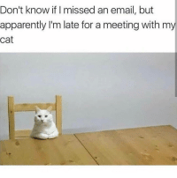 Apparently, Memes, and Email: Don't know if missed an email, but  apparently I'm late for a meeting with my  cat pls have a seat, we need to talk