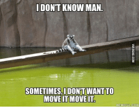 All hail King Julien! http://9gag.com/gag/7070970?ref=fbp: DONT KNOW MAN  SOMETIMES IDONT WANT TO  MOVE IT MOVE IT  MEME FUL COM All hail King Julien! http://9gag.com/gag/7070970?ref=fbp