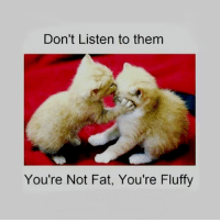 Youre Not Fat: Don't Listen to them  You're Not Fat, You're Fluffy