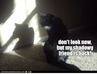 Back, Friend, and Now: don't look now,  but my shadowy  friend is back!