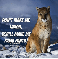 DON'T MAKE ME  LANGH,  YOU'LL MAKE ME  PANTS  IMM Don't make me laugh! 😂 Send in your dadjokes-puns 😆 . . . . . dadjokes funny jokes puns puma cat laugh hilarious lol meme random love like photooftheday humor follow