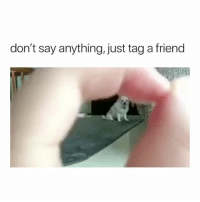 Cute, Girl Memes, and Say Anything...: don't say anything, just tag a friend this is such a cute little dog