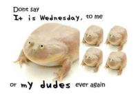 Don't son me talk son what son me help don't.: Dont say  is Wednesday  to me  or my dudes ever again Don't son me talk son what son me help don't.