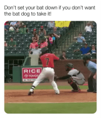 Bless Up, Dogs, and Memes: Don't set your bat down if you don't want  the bat dog to take it!  RICE  TOYOT DOGS DO THE BEST JOB AT ANY JOB THEY HAVE. EMPLOYEE OF THE MONTH EVERY 👏 MONTH 👏. DON'T @ ME. BLESS UP 😍😂😂