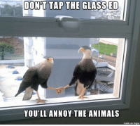 .: DON'T TAP THE GLASSED  YOU'LL ANNOY THE ANIMALS  made on imgur .
