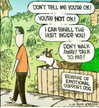 Memes, Tumblr, and Blog: DON'T TeLL Me YOU'Re OK!  HURT INSIDe YOU!  DON'T WALK  AWAY! TALK  TO Me!  BEWARE OF  EMOTIONAL  SUPPORT DOG  4-24, e2018 positive-memes:  Beware of the emotional support dog