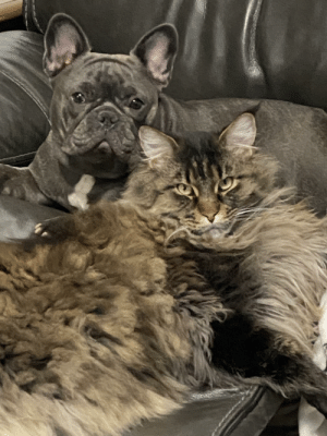 Don't think my cat's happy at being caught with his secret lover, all this time I thought they were frenemies.: Don't think my cat's happy at being caught with his secret lover, all this time I thought they were frenemies.
