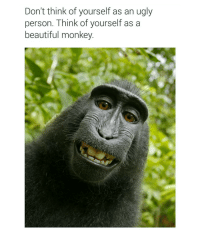 Don't think of yourself as an ugly  person. Think of yourself as a  beautiful monkey tag someone who needs to hear this (and follow @chaos.reigns_ 👈)