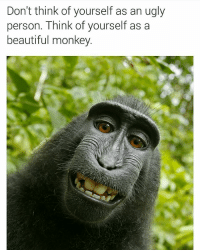have a good day you beautiful monkey (thx for following @chaos.reigns_👈): Don't think of yourself as an ugly  person. Think of yourself as a  beautiful monkey. have a good day you beautiful monkey (thx for following @chaos.reigns_👈)