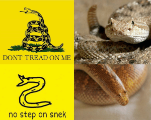 """Tumblr, Blog, and Good: DONT TREAD ON ME  no step on snek melonmemes:  Is this a good format? Can it compete with the """"Inflate Shibe"""" format?"""