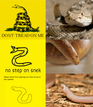 Step, Foot, and Top: DONT TREAD ON ME  no step on snek  Please refrain from placing your foot on top of  this reptilian 🐍ank