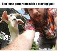 Don't use panorama With a moving goat.  Via reddit @Louis83 This is why you don't use panorama with a moving goat...