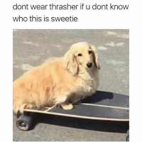 Memes, Pro, and 🤖: dont wear thrasher if u dont know  who this is sweetie you're a skating fan? who is this pro skater then