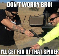 Funny Spider Pictures: DON'T WORRY BRO!  ILL GET RID OF THAT SPIDER