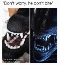"""Dank, Dogs, and Meme: """"Don't worry, he don't bite""""  @stuffthatlookslikestuff  n3wphonewhodis Don't worry, he won't lay eggs in your chest... 👽 (@stuffthatlookslikestuff is legit one of my fav pages - FOLLOW @stuffthatlookslikestuff) • • • alien aliens dog dogs doggo bite vicious mean nice goodboy gooddog xenomorph hedoesntbite meme memes memeoftheday memesfordays memesdaily dankmemes dank nasa doppleganger lookalike twins puppy pupper woof ouch sundaynight monday"""