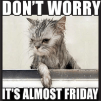 Don't worry it's almost Friday       #cat: DON'T WORRY  IT'S ALMOST FRIDAY Don't worry it's almost Friday       #cat