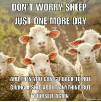 Memes, Shit, and Back: DONT WORRY SHEEP.  JUST ONE MORE DAY  AND THEN YOU CAN GO BACK TO NOT  GIVING A SHIT ABOUT ANYTHING BUT  YOURSELF  AGAIN  mematic net