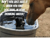 """Dog Hair in your drink~: DON'T YOU MUST HATER  DRINKING WATER!  """"Doga, eata C Horses cn T Dog Hair in your drink~"""