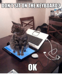 LOLcats, You, and What: DONTSTON THEKEYBOARDED  OK What?! But you said...