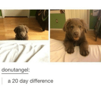 Memes, Tumblr, and 🤖: donutangel:  a 20 day difference Tumblr post!!