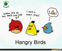 Birds Funny: dood  I need a  Where did alA  NORM the  the's biRa seed  STAT!  Hangry Birds  funny
