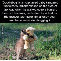 Dank, 🤖, and Human: 'Doodlebug' is an orphaned baby kangaroo  that was found abandoned on the side of  the road when he walked up to a human,  held out his arms, and asked to picked up.  His rescuer later gave him a teddy bear,  and he wouldn't stop hugging it. The feels http://9gag.com/gag/aq2e3Pp?ref=fbp