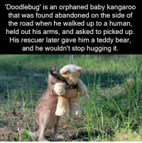 : Doodlebug' is an orphaned baby kangaroo  that was found abandoned on the side of  the road when he walked up to a human,  held out his arms, and asked to picked up  HiS rescuer later gave him a teddy bear,  and he wouldn't stop hugging it.
