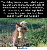 Animals, Anime, and Baby, It's Cold Outside: Doodlebug' is an orphaned baby kangaroo  that was found abandoned on the side of  the road when he walked up to a human,  held out his arms, and asked to picked up.  His rescuer later gave him a teddy bear,  and he wouldn't stop hugging it.  TalentA  Explore I am in love with Doodlebug <3  Wow Amazing Animals