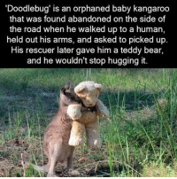 Baby, It's Cold Outside, Love, and Memes: Doodlebug' is an orphaned baby kangaroo  that was found abandoned on the side of  the road when he walked up to a human,  held out his arms, and asked to picked up.  His rescuer later gave him a teddy bear,  and he wouldn't stop hugging it. I am in love with Doodlebug <3
