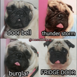 Animals, Dogs, and Memes: door bell  thunder storm  burglar FRIDGE DOOR Dog Memes Of The Day 32 Pics – Ep28 #dogs #dogmemes #memes#lovelyanimalsworld - Lovely Animals World