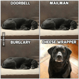 Dog, Cheese, and Security: DOORBELL  MAILMAN  BURGLARY  CHEESE WRAPPER Pretty well sums up the security my dog provides