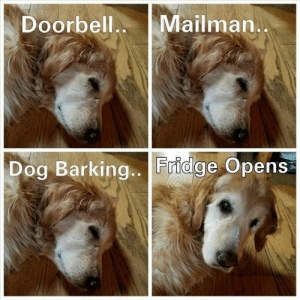Animals, Dogs, and Memes: Doorbell Mailman  Dog Barking.. Fridge Opens Dog Memes Of The Day 32 Pics – Ep33 #dogs #doglovers #lovelyanimalsworld - Lovely Animals World