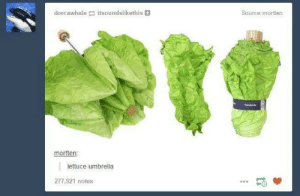 A binge dump nobody asked for 43/50: dorcawhale itsoundslikethis  Source:mortten  mortten:  lettuce umbrella  277,921 notes A binge dump nobody asked for 43/50