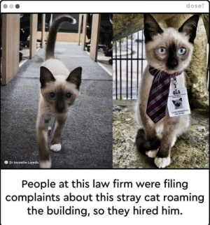 The only Lawyer I'd trust: dose  LEON ADVOGATO  Dr Jeanette Laredo  People at this law firm were filing  complaints about this stray cat roaming  the building, so they hired him. The only Lawyer I'd trust
