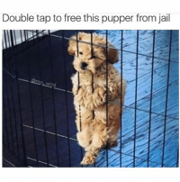 This is no place for a pupper please set him free (@mo_wad): Double tap to free this pupper from jail  wad This is no place for a pupper please set him free (@mo_wad)