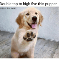 @rickietruong has the best pics on IG. Follow @rickietruong: Double tap to high five this pupper  @Kevin The Kiddd @rickietruong has the best pics on IG. Follow @rickietruong