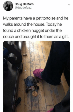 tortoise: Doug DeMars  @dugdefuzz  My parents have a pet tortoise and he  walks around the house. Today he  found a chicken nugget under the  couch and brought it to them as a gift.