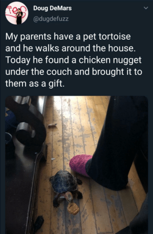 Doug, Parents, and Chicken: Doug DeMars  @dugdefuzz  My parents have a pet tortoise  and he walks around the house.  Today he found a chicken nugget  under the couch and brought it to  them as a gift. Accept this token of wholesome gratitude