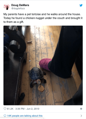 This is the best roommate you can ask for: Doug DeMars  @dugdefuzz  My parents have a pet tortoise and he walks around the house.  Today he found a chicken nugget under the couch and brought it  to them as a gift.  61.2K 3:36 PM Jun 2, 2019  14K people are talking about this This is the best roommate you can ask for