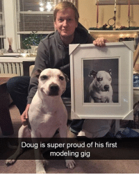Doug, Memes, and Butterfly: Doug is super proud of his first  modeling aig Follow me @antisocialtv @lola_the_ladypug @x__social_butterfly__x @x__antisocial_butterfly__x