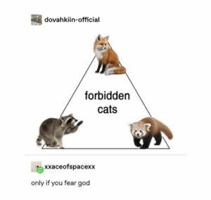 Cats, God, and Fear: dovahkiin-official  forbidden  cats  xxaceofspacexx  only if you fear god