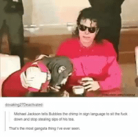 Fucking, Gangsta, and Michael Jackson: dovak  Deactivated:  Michael Jackson tells Bubbles the chimp in sign language to sit the fuck  down and stop stealing sips of his tea.  That's the most gangsta thing ve ever seen. The most gangsta thing I've seen all day