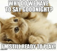 Memes, 🤖, and Another: DOWE  TO SAY GOODNIGHT  WHY  HAVE Another weekend over:(