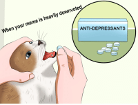 downvoted  heavily is meme your When ANTI-DEPRESSANTS The worst feeling