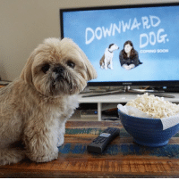 Abc, Love, and Memes: DOWNWARD If you've ever wondered what your dog is thinking, then you'll love Downward Dog! There's finally a relatable character on TV. The special premiere is May 17th on ABC, but you can watch the first episode early at the link in my bio. @downwarddog_abc downwarddog ad