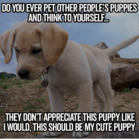 #ToMakeYouLaugh :D: DOYOU EVERPETOTHER PEOPLE SPUPPIES  AND THINKTOYOURSELF  THEY DONTAPPRECIATE THIS PUPPY LIKE  I WOULD THIS SHOULD BE MY CUTE PUPPY #ToMakeYouLaugh :D