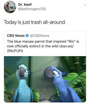 """News, Trash, and Cbs: Dr. Keef  @keithrogers135  Today is just trash all-around.  CBS News @CBSNews  The blue macaw parrot that inspired """"Rio"""" is  now officially extinct in the wild cbsn.ws/  2NUFUFb It's been a sad last couple of days"""