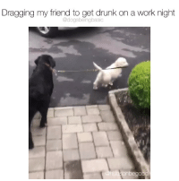 Drunk, Memes, and Work: Dragging my friend to get drunk on a work night  @dogsbeingbasic Some of us need no dragging. Pup @hudsonbegood