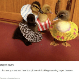 I am now happy via /r/wholesomememes https://ift.tt/32e9qff: dragon-bourn:  In case you are sad here is a picture of ducklings wearing paper dresses  Source: dragon-bourn I am now happy via /r/wholesomememes https://ift.tt/32e9qff
